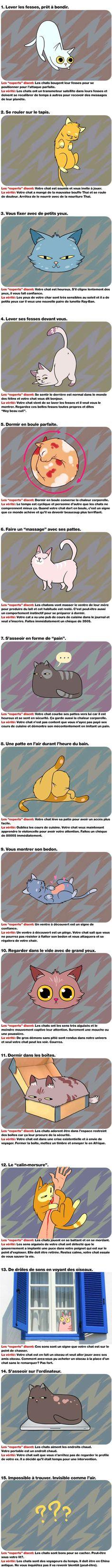 La vérité choquante derrière le comportement des chats http://crisscestdrole.com/post/la-verite-choquante-derriere-le-comportement-des-chats/5969