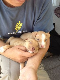 Pitbull puppies!