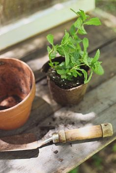 Grow mint...make tea!