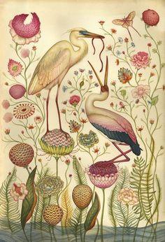old botanical illustration botanical illustration, lindsey carr, color, artist, birds, garden, early bird, flower, print