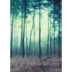 Dan Isaac Wallin Fairyland