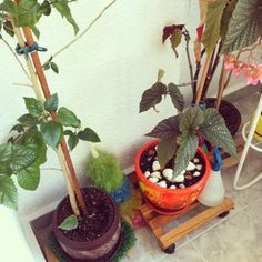 <3 the arrangement of the terrace at home :)