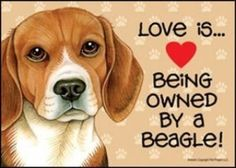 beagles   ...........click here to find out more     http://googydog.com
