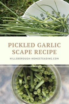 Garlic scapes are a delicious, beautiful delicacy that you can harvest off of your garlic plants sometime around June. This recipe shows you how to pickle garlic scapes easily for delightful, crunchy pickles. Real Food Recipes, Healthy Recipes, Veggie Recipes, Healthy Eats, Snack Recipes, Dinner Recipes, Scape Recipe, Pickled Green Tomatoes, Pickled Garlic
