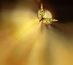 Stela of Light by Josep Sumalla on 500px