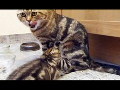The food chain | Funny Cats and Kittens