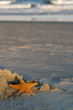 Pawley's Island, South Carolina  ...found my first starfish here!