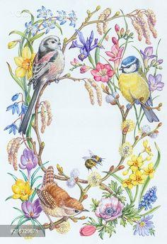 Long-tailed tit, wren and blue tit with bee Illustrations, Illustration Art, Bird Drawings, Bird Pictures, Watercolor Bird, Botanical Art, Bird Art, Beautiful Birds, Cute Art