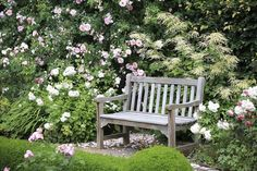 Old wooden park bench surrounded by beautiful rose bushes.