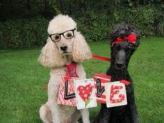 Finny and Bella sending poodle love to you.
