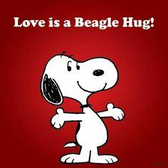 El beagle mas lindo del mundo