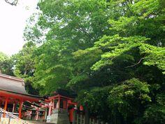 Fushimi Inari-taisha,  2011-06-06