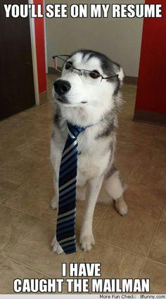 job interview dog tie