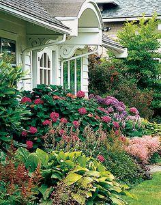 foundation garden of mophead hydrangeas + hosta + astilbe