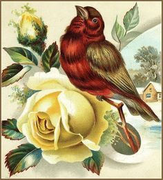 Red Winter Bird and Yellow Rose Downloadable, Printable, Digital Art Image