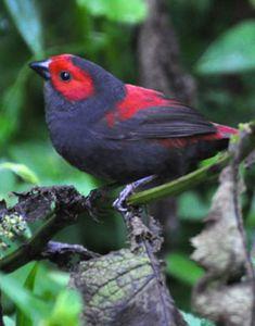 19 Days Birding Safari and Wildlife Tour Pretty Birds, Beautiful Butterflies, Beautiful Birds, Shoebill Bird, Planeta Animal, Bird Identification, Finches, Rare Birds, Extinct Animals