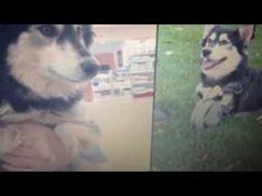 Dog Gets 3-D Printed legs
