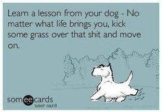 "E-Card: Dog Humor: ""Learn a lesson from your dog - No matter what life brings you, kick some grass over that sh*t and move on. Motivacional Quotes, Great Quotes, Inspirational Quotes, Beer Quotes, Dog Quotes Love, Wisdom Quotes, Motivational, Lesson Quotes, Quotes Images"