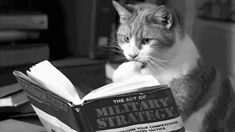 even kitty reads