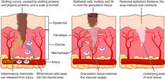 collagen fibres in old people - Google Search