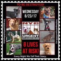 TO BE DESTROYED 08/23/17