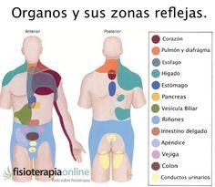Cada órgano tiene su zona refleja, descubre cuales son
