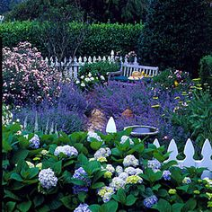 flower beds of hydrangeas, purple catmint, and pink Carefree Delight English roses.