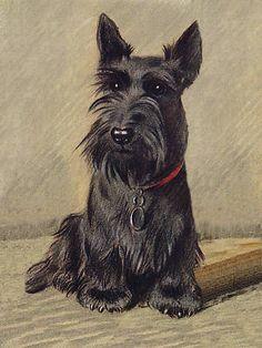 Print of Scottish Terrier...