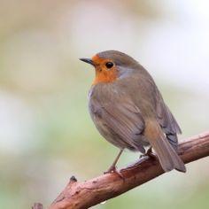 Richt je tuin in voor vogels