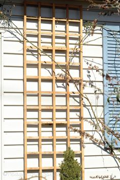 Installing a Trellis for Climbing Roses Onto Your House