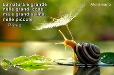 Aforismario®: Natura - 150 Frasi naturalistiche