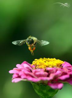 Still Flying :) by Mohan Duwal