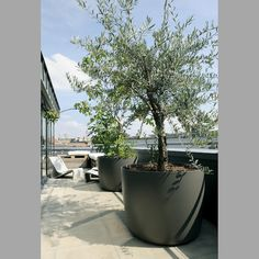 large scale planter for roof - Design for the Garden | Modern Design