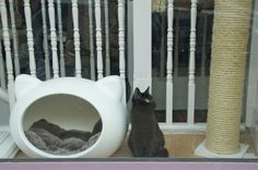 Window shopping - Take a peak inside Lady Dinah's Cat Emporium - London's first cat cafe! #cats #cat #catlovers #cute #catcafe #animals #london #pets #petlovers #fluffy