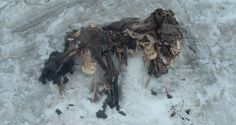 Melting glaciers within the Italian Alps have uncovered the corpses and artifacts of soldiers who died over 100 years ago in a deadly World War I battle. Ww1 Soldiers, Wwi, World War One, First World, Man Of War, Austro Hungarian, Mystery Of History, Northern Italy, Weird Pictures