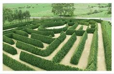 The Mintaro Maze in Clare Valley, South Australia. Interesting triangular hedge shape - influenced by the conifers used to make the maze.