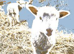 Sheep Farm - Artwork: digital serigraph on paper
