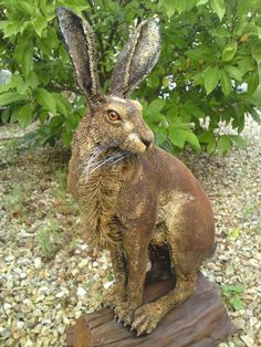An Autumn Hare by tisbone.deviantart.com on @deviantART   Lighting    Pinterest   Autumn, Art and deviantART
