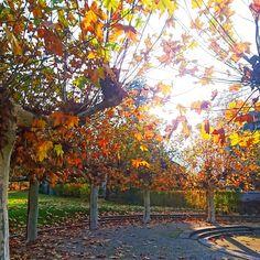 Schöner bunter Herbst.  #herbst #autumn #Adliswil #lebeninadliswil #stadtadliswil #Sihltal #lebenimsihltal #zuerich #kantonzuerich #Schweiz… Outdoor Furniture, Outdoor Decor, Bunt, Park, Instagram, Home Decor, Switzerland, Autumn, Life
