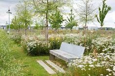 ogród łąka kwietna - Szukaj w Google: