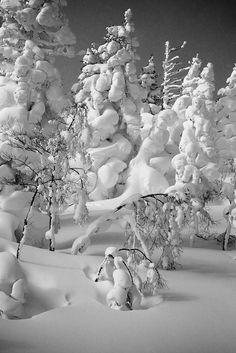 Land of Snow, Hachimantai in Iwate, Japan