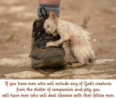 God's creatures deserve shelter, love and compassion.