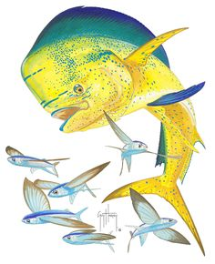 BULL DOLPHIN - by Guy Harvey. Mahimahi (aka dolphin fish or dorado) chasing a school of flying fish. They are found worldwide & are one of the most often caught offshore gamefish.  They are prized for food, as well as their acrobatics & beautiful neon colors (vibrant greens to blues to yellows). They live fast-growing but short lives.