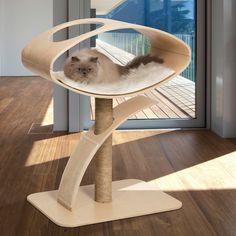 For More  Cat Stuff   Click Here http://moneybuds.com/Cat/