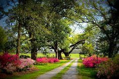 Bocage Plantation, Louisiana Louisiana Plantations, New Orleans Mardi Gras, Grand Homes, Paths, Beautiful Homes, Sidewalk, Country Roads, Nature, Genealogy