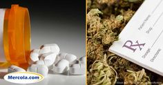 A study is underway to determine which works better for chronic pain, medical marijuana or prescription opioids. http://articles.mercola.com/sites/articles/archive/2016/11/22/medical-marijuana-pain-relief.aspx
