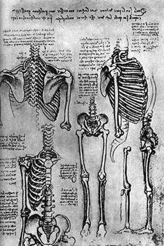 Изучение скелета. Леонардо да Винчи