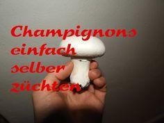 Pilze selber anbauen - YouTube