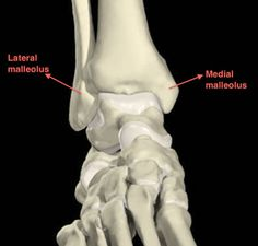 ankle joint - Cerca con Google