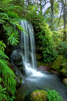 Beautiful natural spring waterfall in North Florida / Photographer Rich Leighton